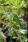 alhue-melipilla-11